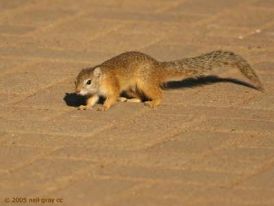 740_Tree_Squirrel_640x480_copy.jpg