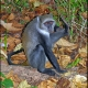 <p>Location : Jozani Chwaka Bay National Park, Zanzibar, Tanzania</p>