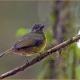 "<p>Sub-species<em>assimilis</em> ---<span style=""font-size: 12.16px;"">Location : Las Cruces Biological Station, San Vito district, Puntarenas province, Costa Rica</span></p>"