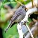 "<p><span style=""font-size: 12.16px;"">Location :Sueños del Bosque, Dota Valley, San Jose province, Costa Rica</span></p>"