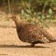 "<p>Sub-species <em>multicolor</em>, male ----<span style=""line-height: 1.3em;"">Location : near Tshokwane</span><span style=""line-height: 1.3em;"">, Kruger National Park, South Africa</span></p>"