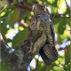 "<p><span style=""font-size: 12.16px;"">Location : </span>Los Cusingos Bird Sanctuary<span style=""font-size: 12.16px;"">, near San Isidro, San Jose province, Costa Rica</span></p>"