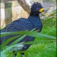 <p>Male --- Location : Birdland, Bourton-on-the-Water, Gloucestershire, England</p>