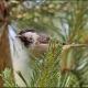"""<p>Sub-species<em>britannicus</em>, juvenile ----<span style=""""font-size: 12.16px; line-height: 1.3em;"""">Location : London Wetland Centre</span></p>"""
