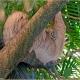 <p>Location : Newquay Zoo, Cornwall, England</p>