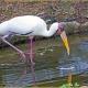 <p>Captive bird ... Location : Jurong Bird Park, Singapore</p>