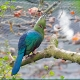 <p>Location : Tropical Birdland, Desford, Leicestershire, England</p>