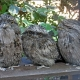 <p>Location : BirdWorld, near Rowledge, Surrey, England</p>