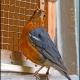 <p>Location : Waddesdon Manor aviary, Buckinghamshire, England</p>