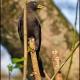 """<p>Sub-species <em>pachyrhynchus</em>,<span style=""""line-height: 1.3em;"""">male ---- </span><span style=""""font-size: 12.16px; line-height: 1.3em;"""">Location : Aldea de la Selva,  Puerto Iguazú, Misiones, Argentina</span></p>"""