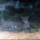 Scanned from 35mm slide taken Sept 1975 ---- Location : Amboseli National Park, Kenya