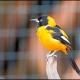 <p>Location : Parque Das Aves, Foz do Iguacu, Brazil</p>