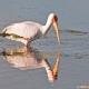 "<p><span style=""line-height: 1.3em;"">Location : Marievale Bird Sanctuary, Gauteng, South Africa</span></p>"