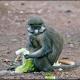 <p>Location : near Kolwezi, Democratic Republic of Congo</p>