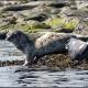 Location : Inner Farne, Farne Islands, Northumberland, England